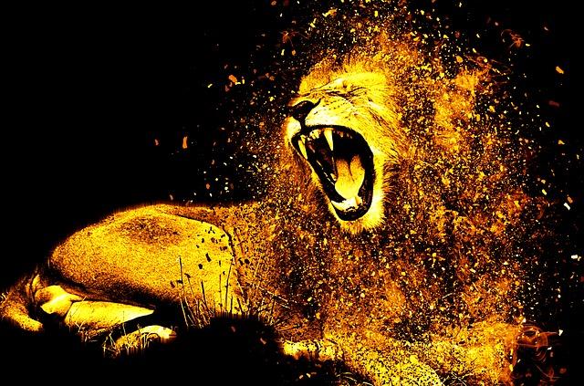 ordító oroszlán