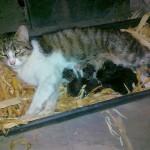Titkár nevű cicánk anya lett!