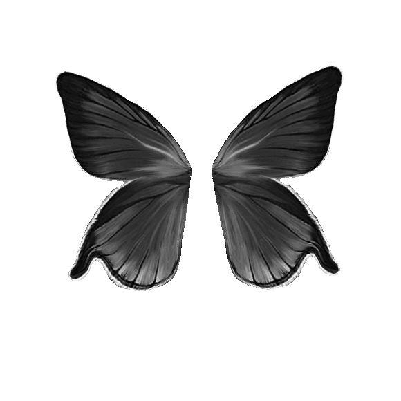 fekete-fehér pillangókép