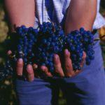 szőlőakézben