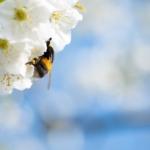 tavasz-beporzás
